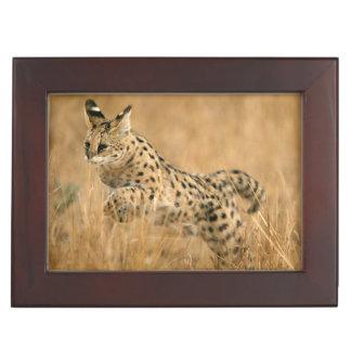 Serval (Leptailurus Serval) Jumping Keepsake Box
