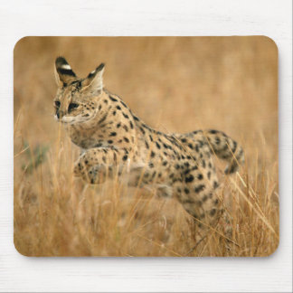 Serval (Leptailurus Serval) Jumping Mouse Mat