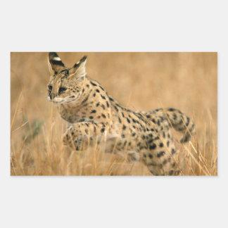 Serval (Leptailurus Serval) Jumping Rectangular Sticker