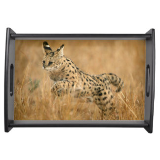Serval (Leptailurus Serval) Jumping Serving Tray