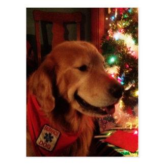 Service Dog Jonah & Christmas Tree Lights Postcard