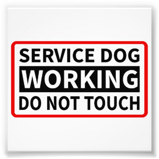 Service Dog Working Please Do Not Touch Photographic Print