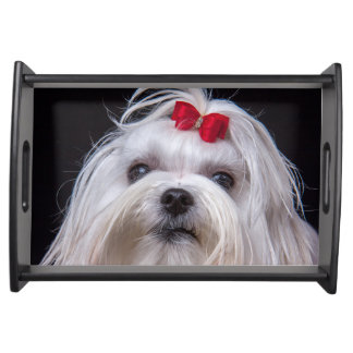 Serving tray of Maltese small white toy dog