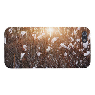 Setting sun in winter forest cover for iPhone 5