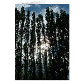 Settlers' Poplar Stand, Horsethief Lake Park, WA Greeting Card