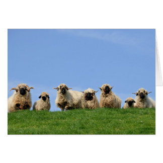 seven curious rasta sheep card