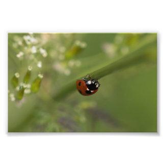 Seven-spot Ladybird Art Photo