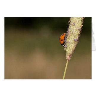 Seven-spot Ladybird Card