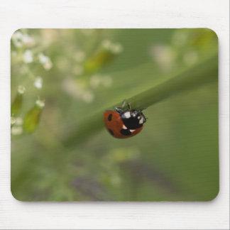 Seven-spot Ladybird Mouse Pad
