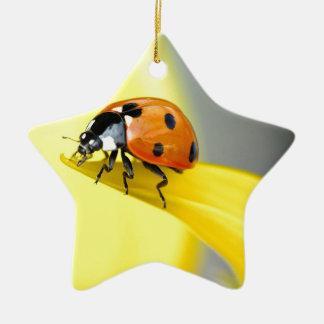 Seven Spot Ladybird takes a walk on a Sunflower Ceramic Star Decoration