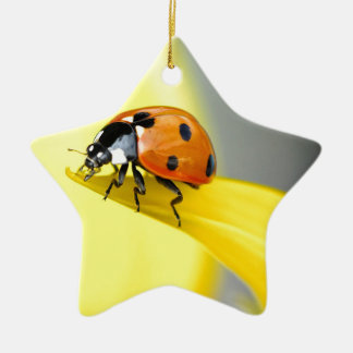 Seven Spot Ladybird takes a walk on a Sunflower Christmas Ornament