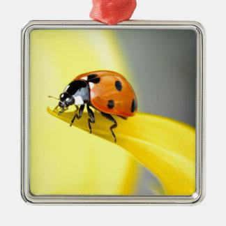 Seven Spot Ladybird takes a walk on a Sunflower Christmas Ornament