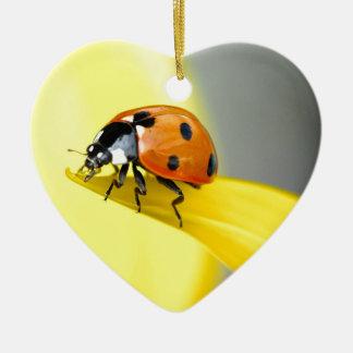 Seven Spot Ladybird takes a walk on a Sunflower Ceramic Heart Decoration
