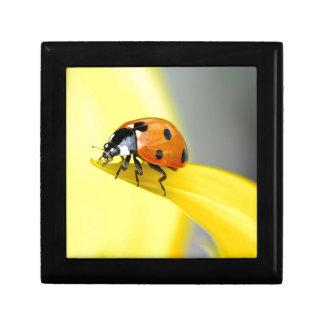Seven Spot Ladybird Takes a Walk on a Sunflower Gift Box