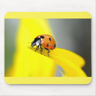 Seven Spot Ladybird Takes a Walk on a Sunflower Mouse Pad