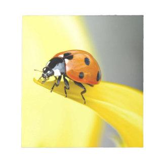 Seven Spot Ladybird Takes a Walk on a Sunflower Notepad