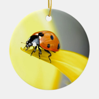 Seven Spot Ladybird takes a walk on a Sunflower Round Ceramic Decoration