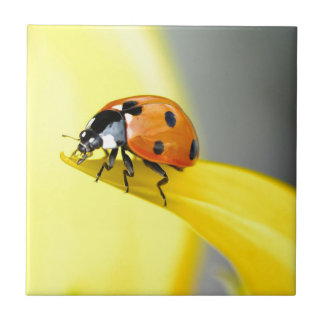 Seven Spot Ladybird Takes a Walk on a Sunflower Small Square Tile