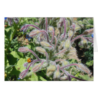 Seven-Spotted Ladybug on Borage Note Card