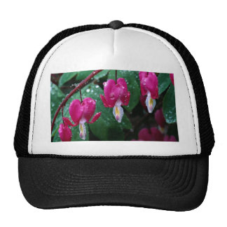Several flowers of bleeding heart plant and water trucker hats