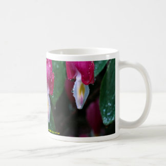 Several flowers of bleeding heart plant and water coffee mug
