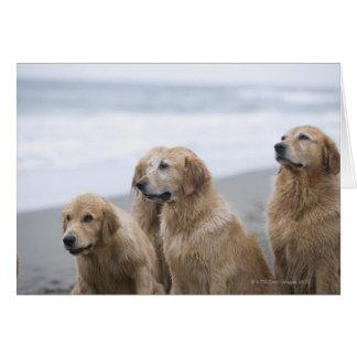 Several Golden retrievers sitting on beach Greeting Card