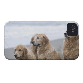 Several Golden retrievers sitting on beach iPhone 4 Cases