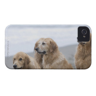 Several Golden retrievers sitting on beach iPhone 4 Cover