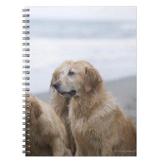 Several Golden retrievers sitting on beach Spiral Notebooks