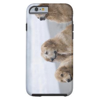 Several Golden retrievers sitting on beach Tough iPhone 6 Case
