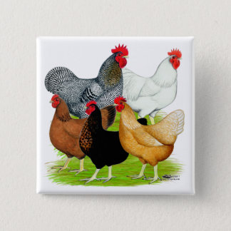 Sex-linked Chickens Quintet 15 Cm Square Badge