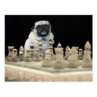 Sexy Misha pug playing chess with glasses Postcard