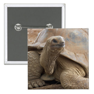 Seychelle Aldabran land tortoise 15 Cm Square Badge