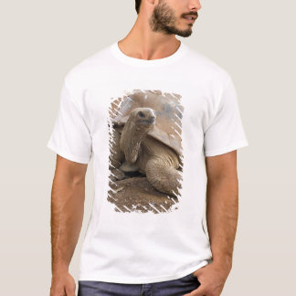 Seychelle Aldabran land tortoise T-Shirt