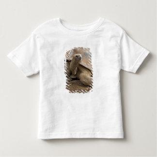 Seychelle Aldabran land tortoise Toddler T-Shirt