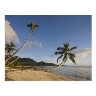Seychelles, Mahe Island, horizontal palm, Postcard