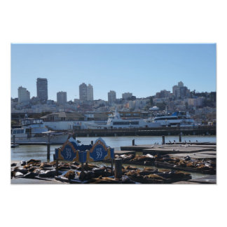 SF City Skyline & Pier 39 Sea Lions Photo Print