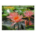 SG Colorado Water Lilies postcard #275  00275275