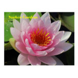SG Lincoln, Nebraska pink water lily #152N  0152