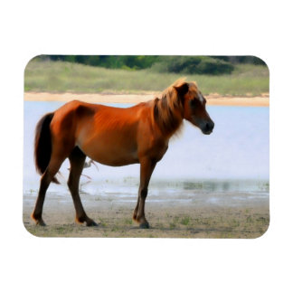 Shackleford Banks Horse Rectangular Magnet