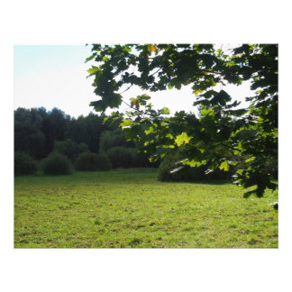Shades of green photograph
