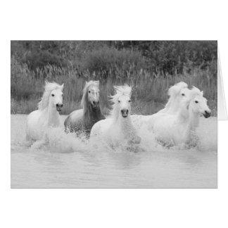Shades of Grey - Horse Greeting Card