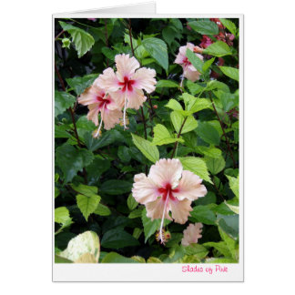 Shades of Pink note card