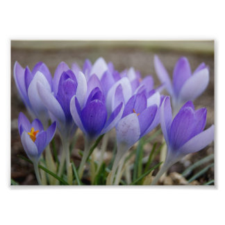 Shades of Purple 7x5 Photographic Print