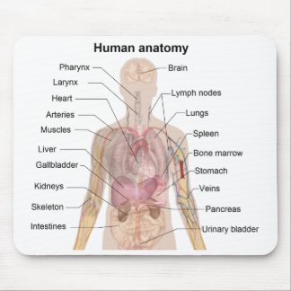 Shadow Diagram of the Human Anatomy Mouse Mat