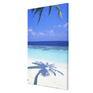 Shadow of Palm Tree Canvas Print