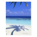 Shadow of Palm Tree Postcard