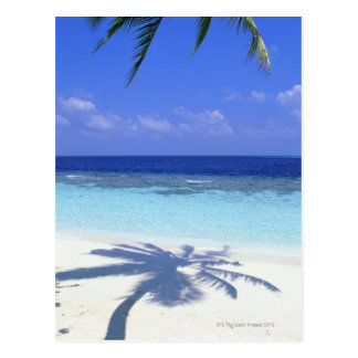 Shadow of Palm Tree Postcard