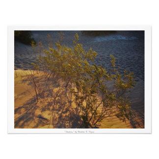 """Shadows"" Desert Nature Decor Photographic Print"