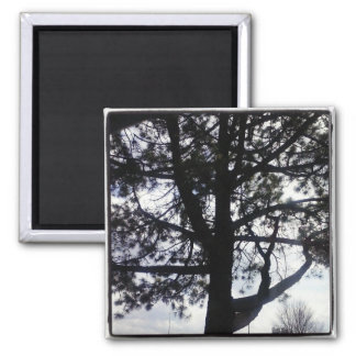 Shadowy Pine Tree Square Magnet